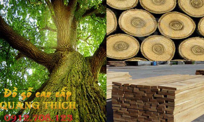 tổng quan vê cây gỗ sồi