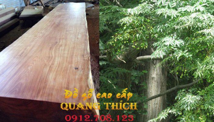 Lá xoan và gỗ xoan